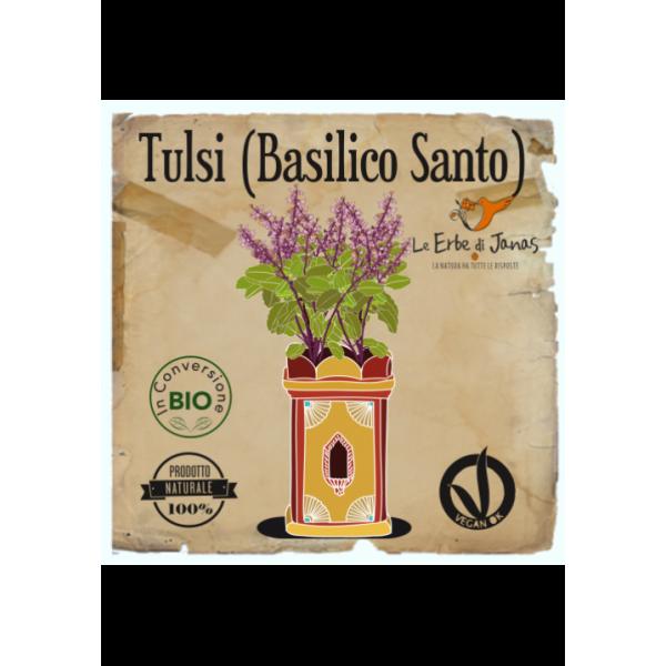 TULSI -BASILIC SANTO, acne, antifungal, antiseptic